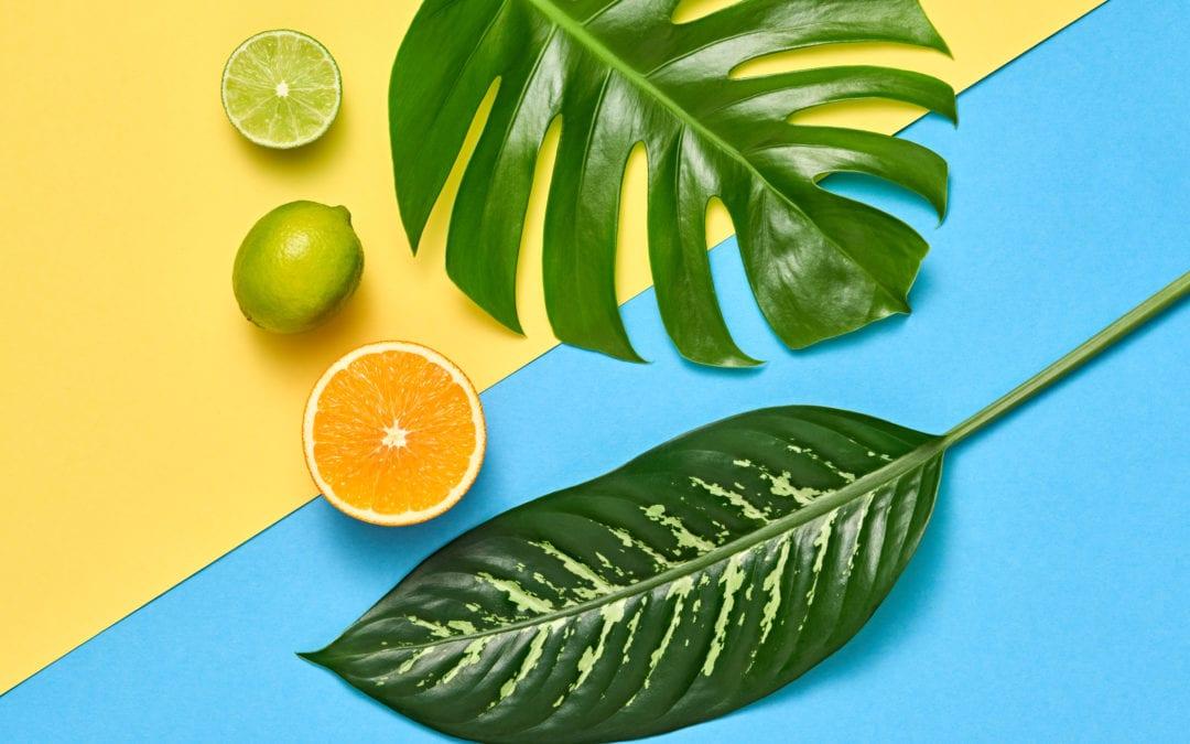 Dr. Q. Palm leaf reading